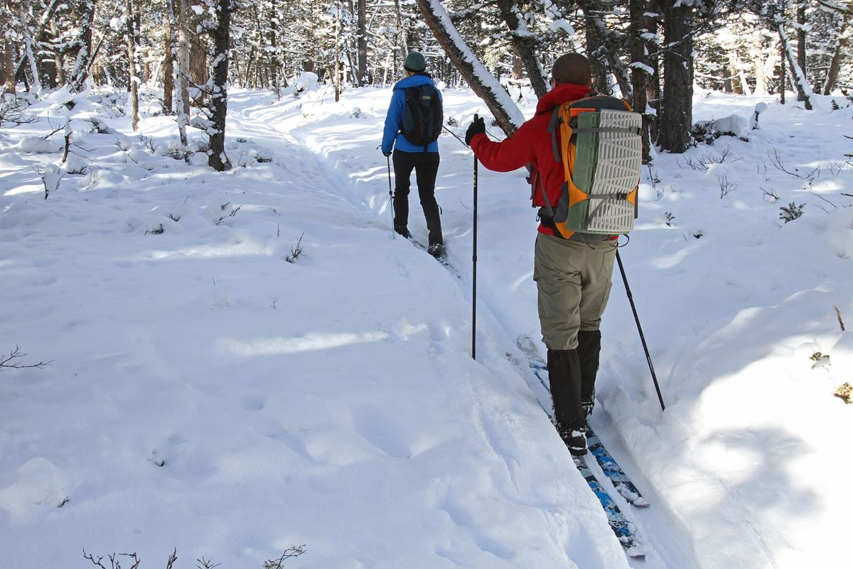 Langlauf im verschneiten Hochschwarzwald
