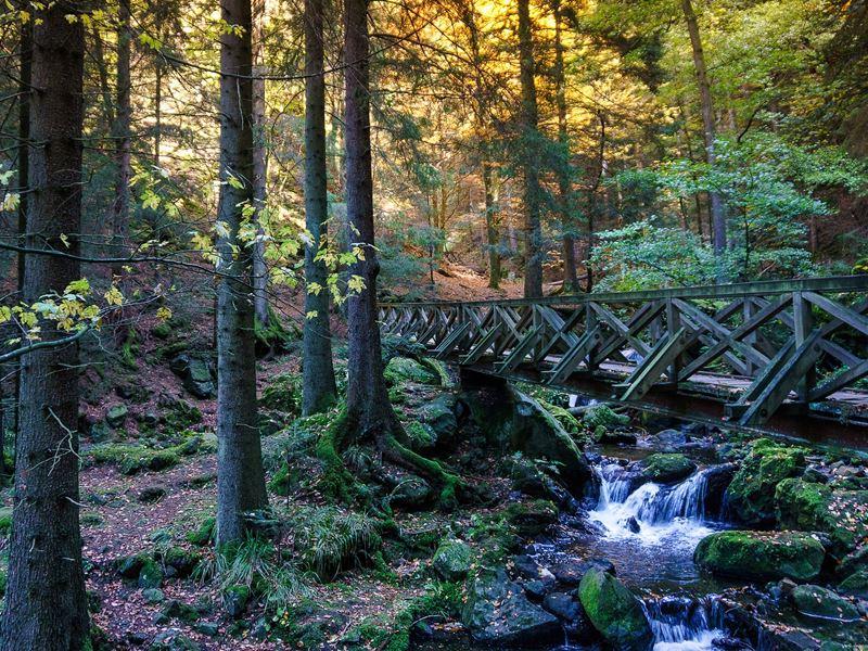 Wandern in Schluchten im Schwarzwald